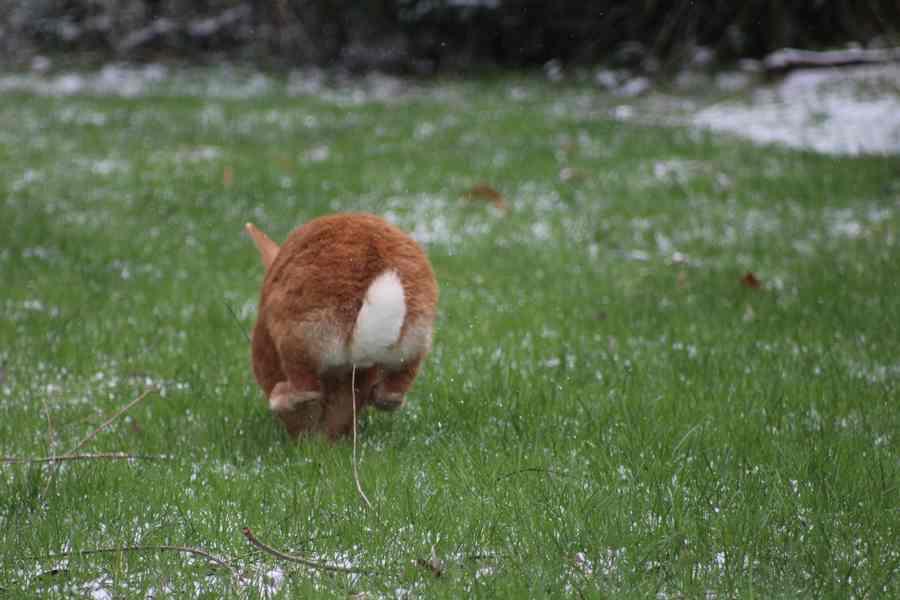 Le miracle, c'est de voir passer un lapin dans le jardin du gîte, c'est tellement rien et c'est tellement tout!